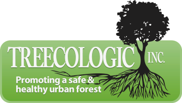 Treecologic | Fredericton's best tree services company